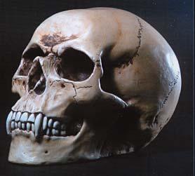 Vampire_skull_733-009